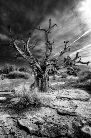 overlook: Dead tree against a dramatic sky at Grand River Overlook, Utah, USA