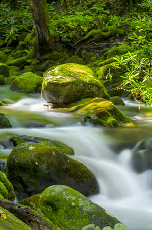 the smokies: Moss-covered boulder highlighted by dappled sunlight in a  Smoky Mountains Park stream
