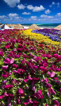 petunias: Multicolored petunias overlooking the ocean