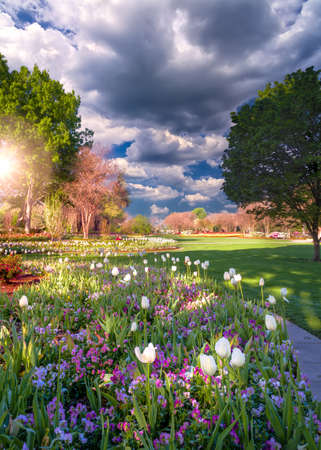 arboretum: Early spring morning scene at a park in Dallas, TX