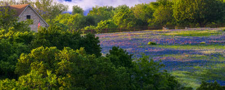Field of bluebonnets and Indian paintbrushes on rural acreage in Texas