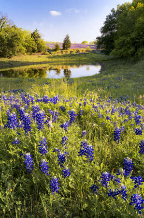 Late afternoon view of a wildflower field behind a Texas winery