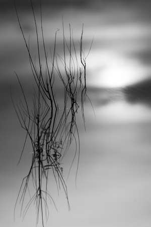 Abstract view of thin branches sticking out of the water at sunrise Reklamní fotografie