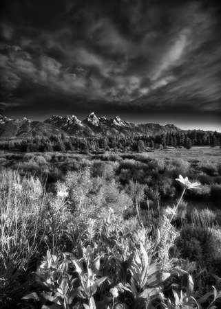 Early summer morning view of the Tetons as seen from Blacktail Ponds Overlook photo