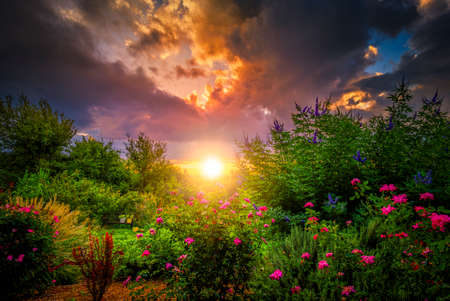 tall grass: Rural sunrise over bushes, grasses, and roses