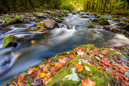 great smoky national park: Mountain stream in Great Smoky Mountain National Park with fall colors on display