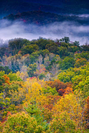 great smoky mountains national park: Fall color explosion in the misty foothills of  Great Smoky Mountains National Park