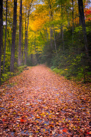 great smoky mountains national park: Hiking trail in the Smoky Mountains on a misty fall morning