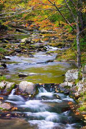 great smoky national park: Laurel Creek in Great Smoky Mountains National Park with fall colors on display Stock Photo