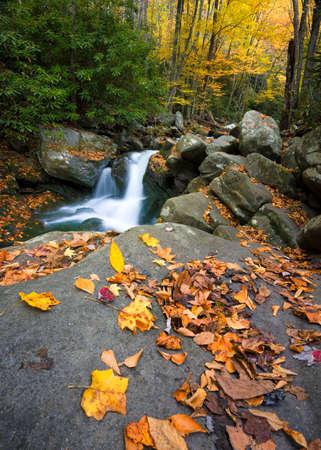 riek: Little River, Lynn Camp Prong, in Great Smoky Mountain National Park met vallen kleuren op het display