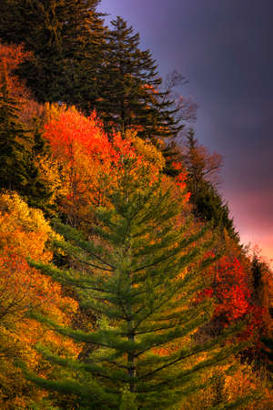 Colorful autumn dawn in the Smoky Mountains photo