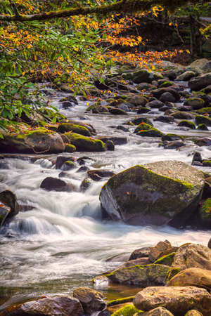 great smokies: Mountain stream in Great Smoky Mountains National Park with fall colors on display