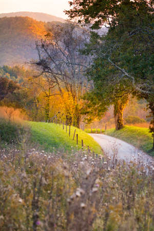 great smoky mountains national park: Late afternoon on a quiet country road in Cades Cove, Great Smoky Mountains National Park