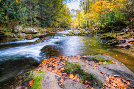 great smoky mountains: Mountain stream in Great Smoky Mountains National Park with fall colors on display