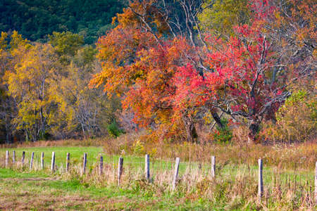 great smoky national park: Fall foliage on display on Sparks Road in Cades Cove, Great Smoky Mountains National Park, TN Stock Photo