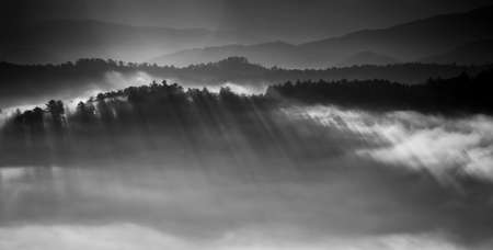 Eerie light casting shadows through the pine trees in the foggy foothills of Great Smoky Mountains National Park photo