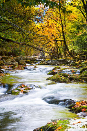 cascade mountains: Mountain stream in Great Smoky Mountain National Park with fall colors on display