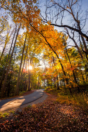 great smokies: Late afternoon on a quiet country road in Cades Cove, Great Smoky Mountains National Park