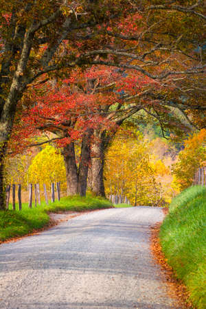 Fall foliage on display on Sparks Road in Cades Cove, Great Smoky Mountains National Park, TN Stock Photo