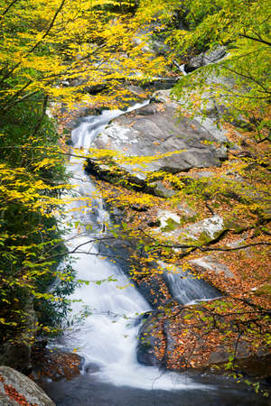 smokies: Cascading creek in the  Great Smoky Mountains National Park with autumn colors on display