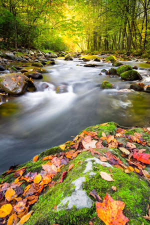 Mountain stream in Great Smoky Mountain National Park with fall colors on display