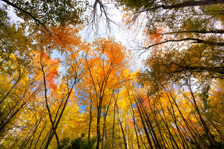 great smoky mountains national park: Colorful foliage on display in the forests of Great Smoky Mountains National park Stock Photo
