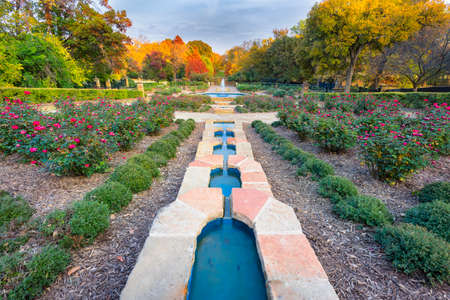 fort worth: Beautifully landscaped urban rose garden on a colorful autumn day in Texas
