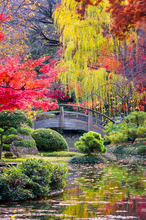 Arched wooden bridge accented by Texas fall colors 스톡 콘텐츠