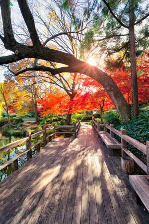 fort worth: View from the boardwalk in the Fort Worth Japanese Gardens during peak autumn colors Stock Photo