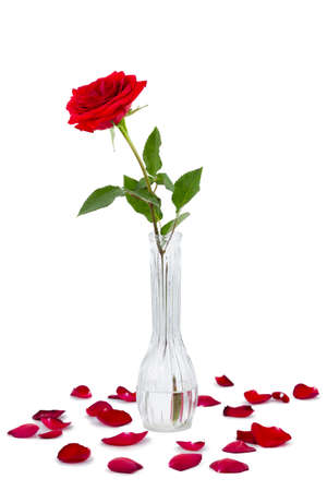 long stem roses: Red long stem rose in a vase isolated on a white background Stock Photo