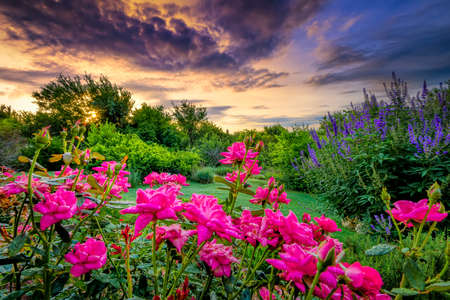 rural countryside: Rural countryside landscape featuring pink roses and colorful bushes