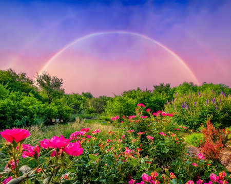 Rural countryside landscape featuring pink roses and a dramatic double rainbow