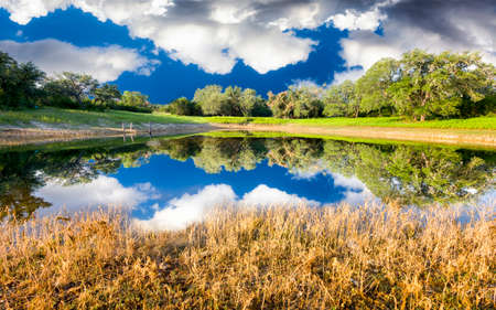Placid rural pond with reflections on a sunny summer day