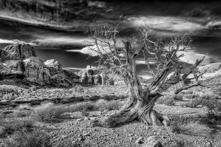 Old dead tree surrounded by rock formations in Arches National park, Utah