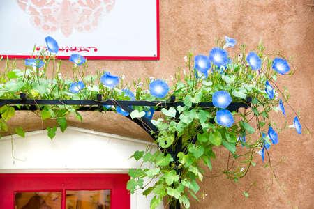nm: Blue flowers adorning a gallery doorway entrance in Santa Fe, NM Stock Photo