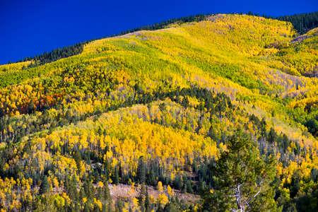 nm: Golden aspens in the Santa Fe, NM ski basin Stock Photo
