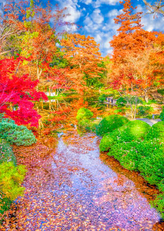 A burst of fall color with fallen leaves in a stream Stock Photo