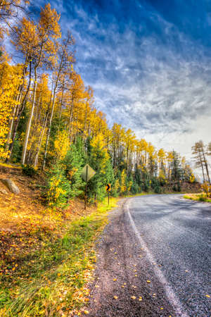 fe: Autumn aspen colors on a rural road in New Mexico