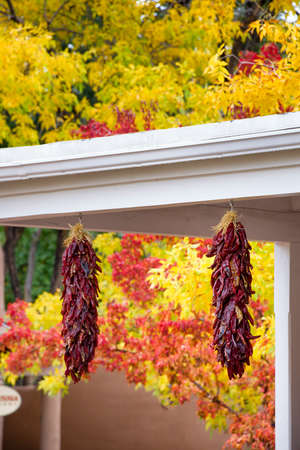 Two strands of red chili peppers hanging in front of stunning fall foliage on Canyon Road in Santa Fe, NM Stock Photo