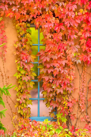 nm: Brightly colored leaves accenting a blue frame window set within an adobe wall in Santa Fe, NM