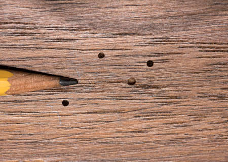 Tiny exit holes in wood paneling caused by the wood boring activity of adult powder post beetles Standard-Bild