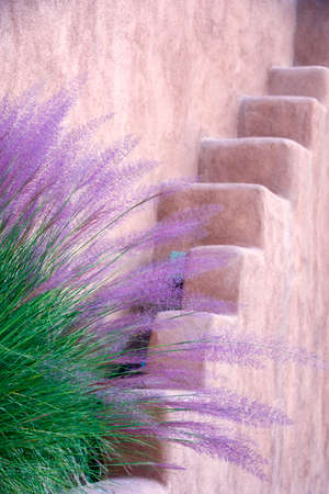 Purple and green tall grasses fronting an adobe wall in Santa Fe, NM