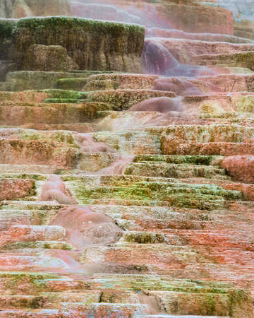 steamy: Steamy, colorful terraced rock formations in Mammoth Hot Springs, Yellowstone National Park