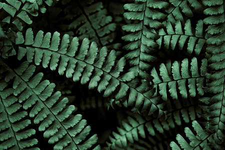 the smokies: Fern fronds in the Smokies arranged in an interesting pattern