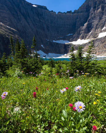 fiori di campo: Red and purple wildflowers leading to a stunning glacial lake