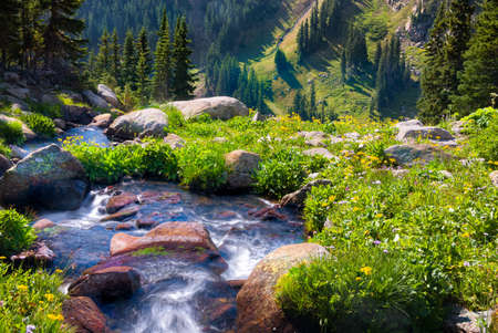 South Fork of Boulder Creek on a sunny summer day with yellow wildflowers in full bloom Stockfoto