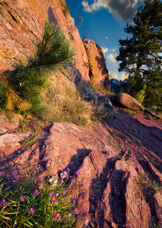 red rocks: Dawn over red rocks and purple wildflowers in Boulder, CO