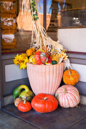 holiday display: Colorful, festive holiday display of assorted pumpkins, gourds, and squashes