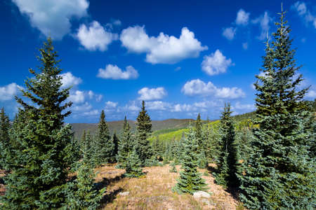 blue summer sky: Stunning summer mountain vista featuring vivid green pine trees and a lovely blue sky with clouds Stock Photo