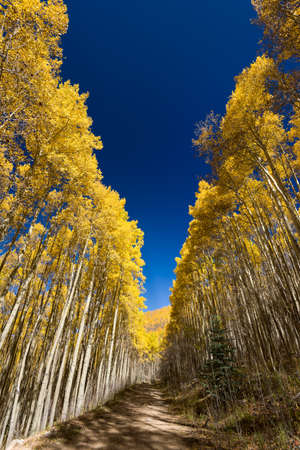 fe: Beautiful fall colors in the mountains of the Santa Fe Ski Basin